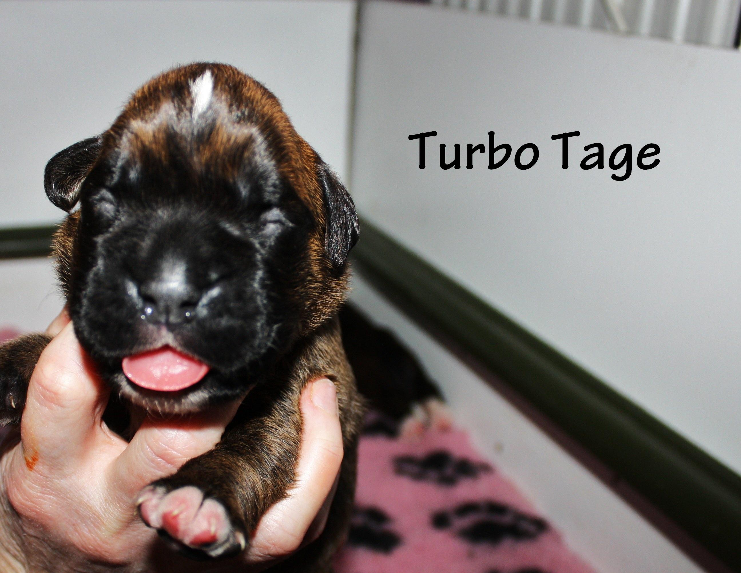 Turbo Tage
