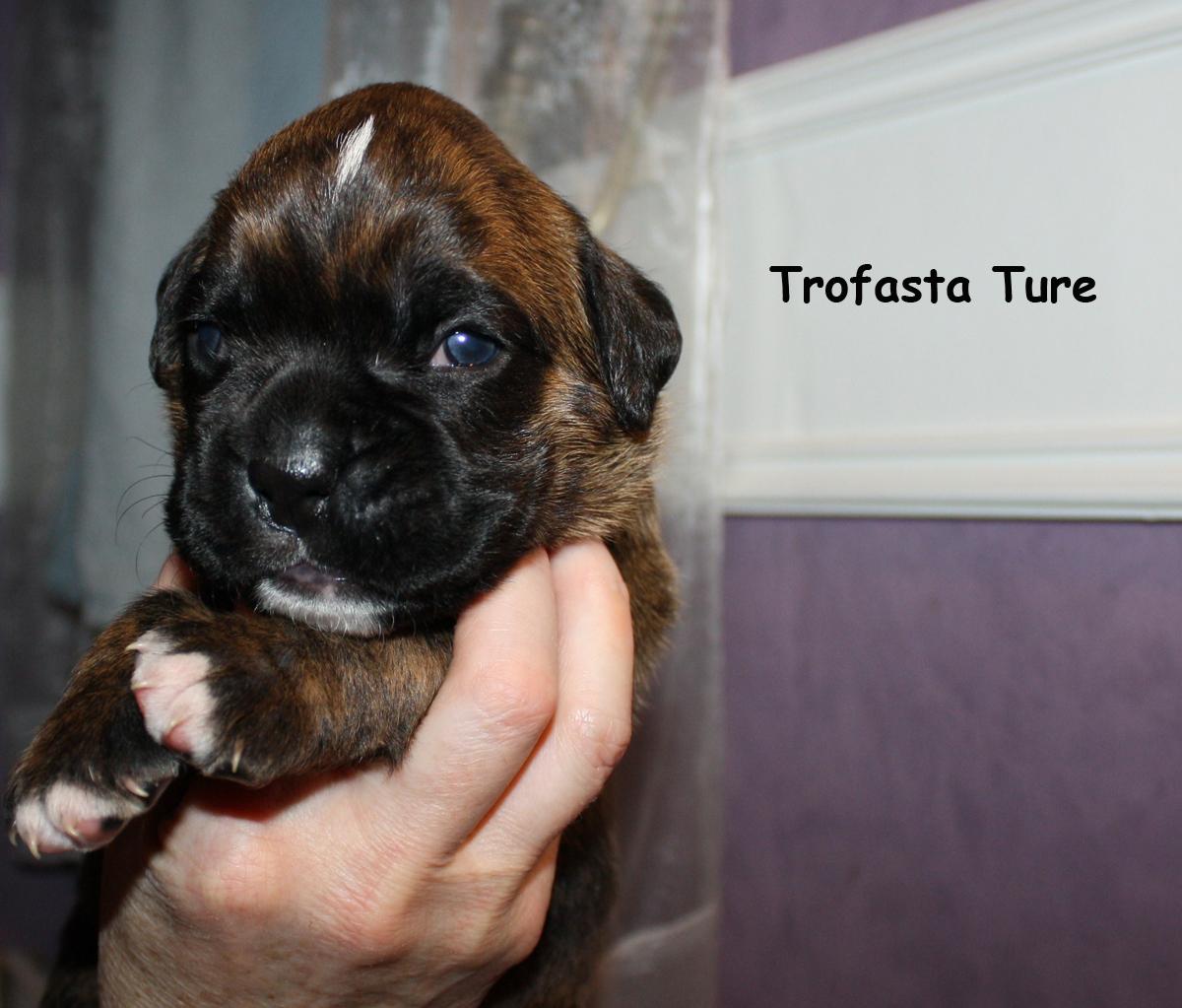 trofasta-ture-2v