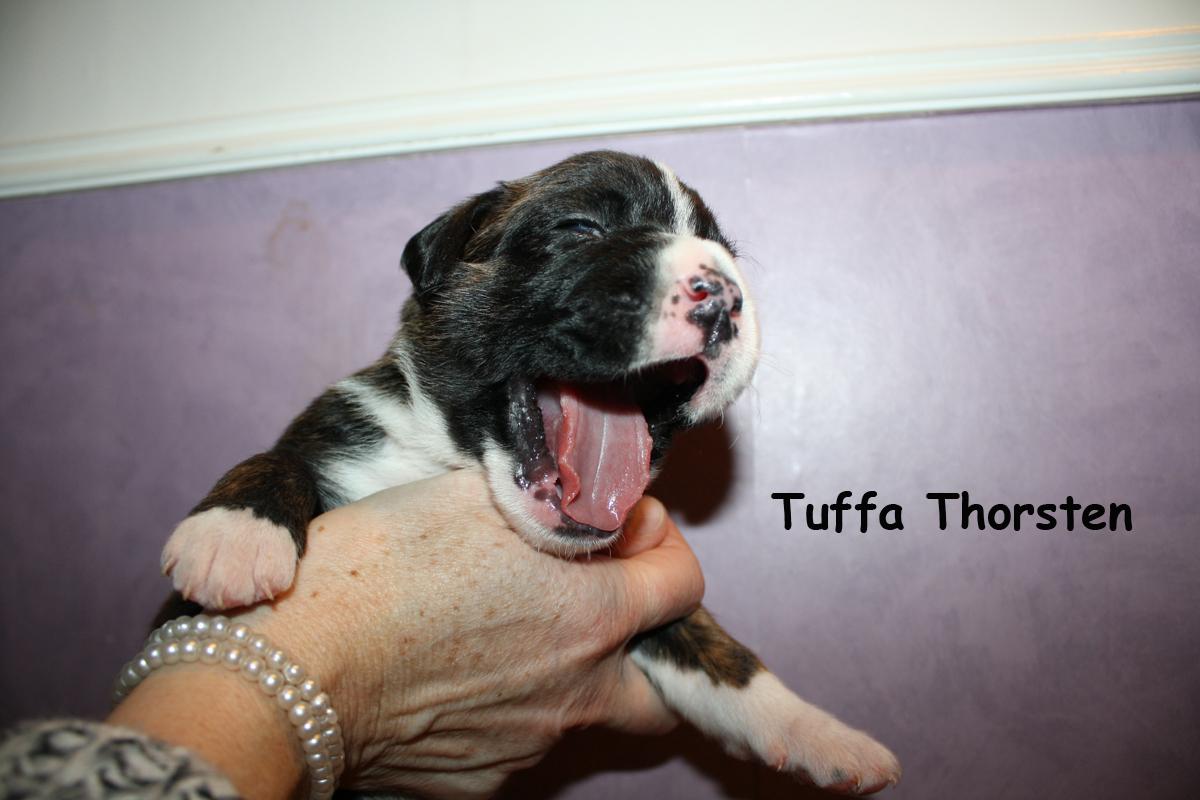 tuffa-thorsten-2v
