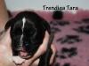 Trendiga Tara