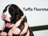 Tuffa Thorsten